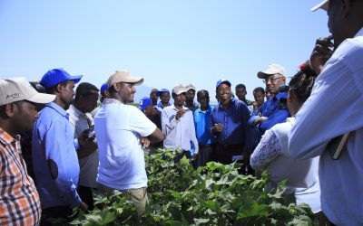 Cotton Field-day Completed Successfully